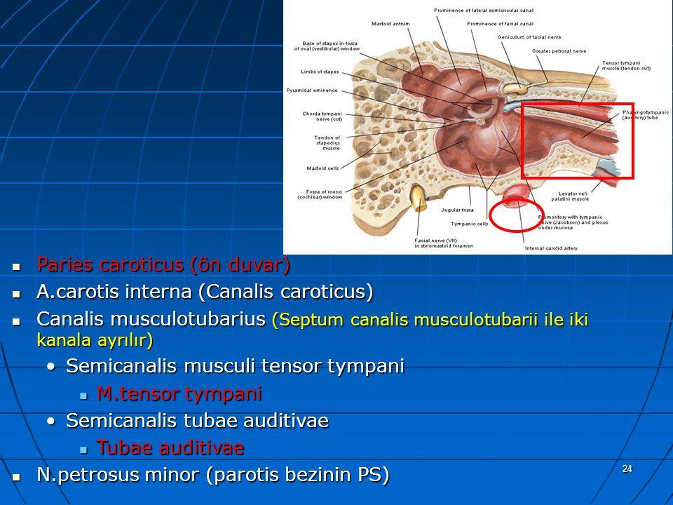 24 a Paries caroticus (ön duvar) Paries caroticus (ön duvar) A.carotis interna (Canalis caroticus) A.carotis interna (Canalis caroticus) Canalis muscu