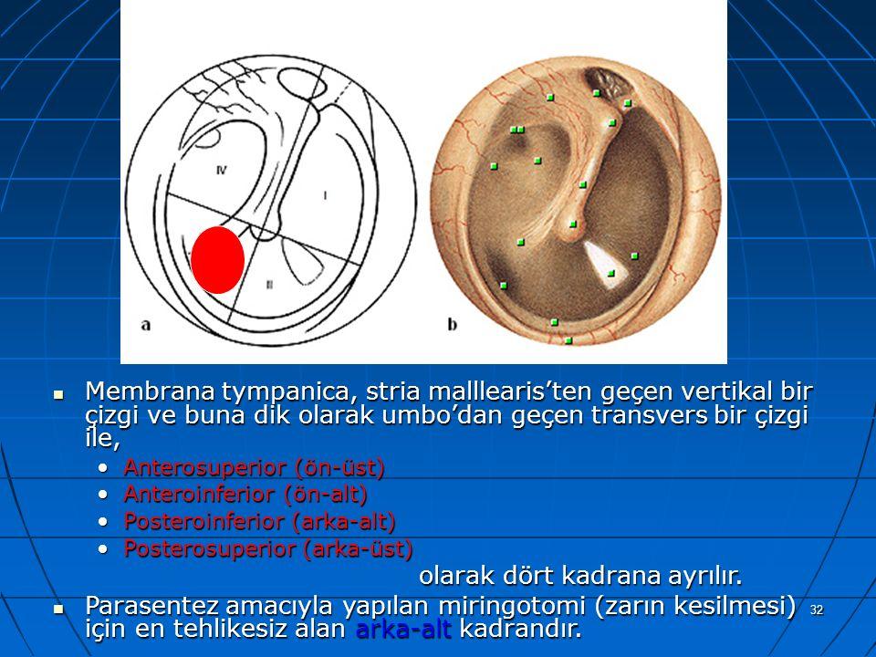 32 a Membrana tympanica, stria malllearis'ten geçen vertikal bir çizgi ve buna dik olarak umbo'dan geçen transvers bir çizgi ile, Membrana tympanica,