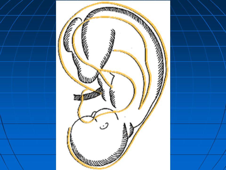 ANTRUM MASTOIDEUM ÖN DUVAR Aditus ad antrum mastoideum ARKA DUVAR Sinus sigmoideus İÇ DUVAR Canalis (ductus) semicircularis posterior ÜST DUVAR (ÇATI) Tegmen tympani ALT DUVAR (TABAN) Cellulae mastoideae DIŞ DUVAR Trigonum suprameatum