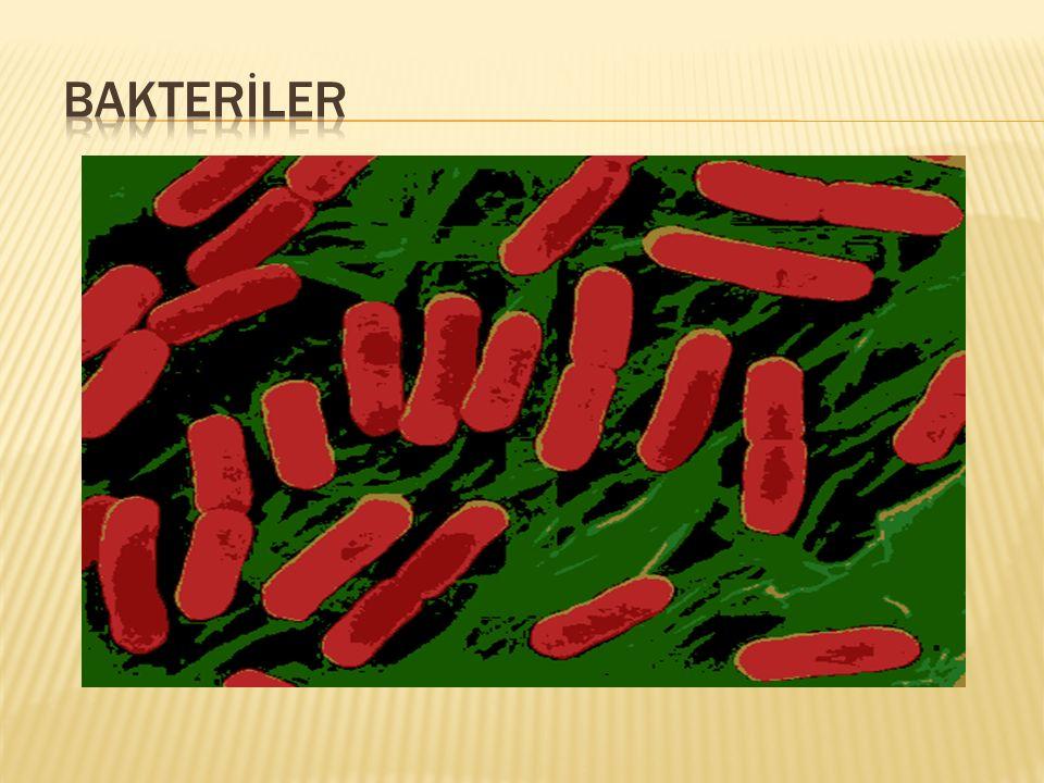  Bakteriler dünyada en çok bulunan canlılar olup toprağın 5 m.