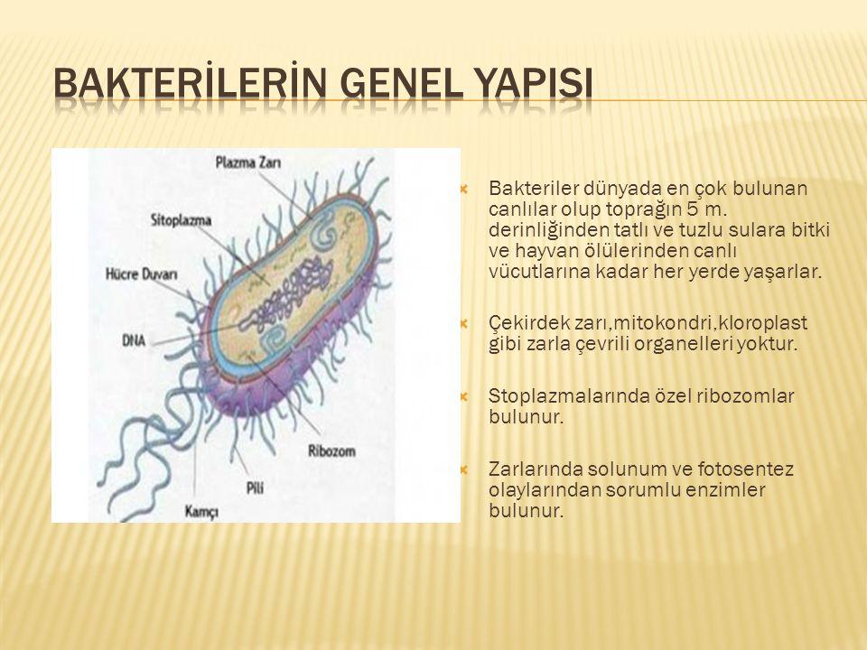  Bakteriler dünyada en çok bulunan canlılar olup toprağın 5 m. derinliğinden tatlı ve tuzlu sulara bitki ve hayvan ölülerinden canlı vücutlarına kada