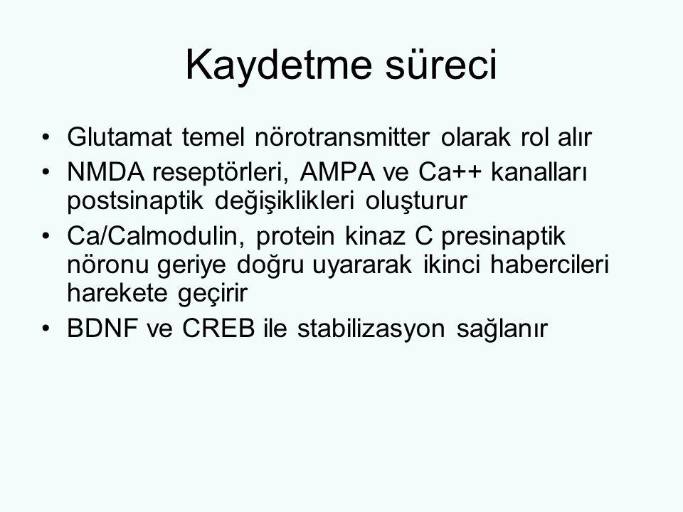 Kaydetme süreci Glutamat temel nörotransmitter olarak rol alır NMDA reseptörleri, AMPA ve Ca++ kanalları postsinaptik değişiklikleri oluşturur Ca/Calmodulin, protein kinaz C presinaptik nöronu geriye doğru uyararak ikinci habercileri harekete geçirir BDNF ve CREB ile stabilizasyon sağlanır