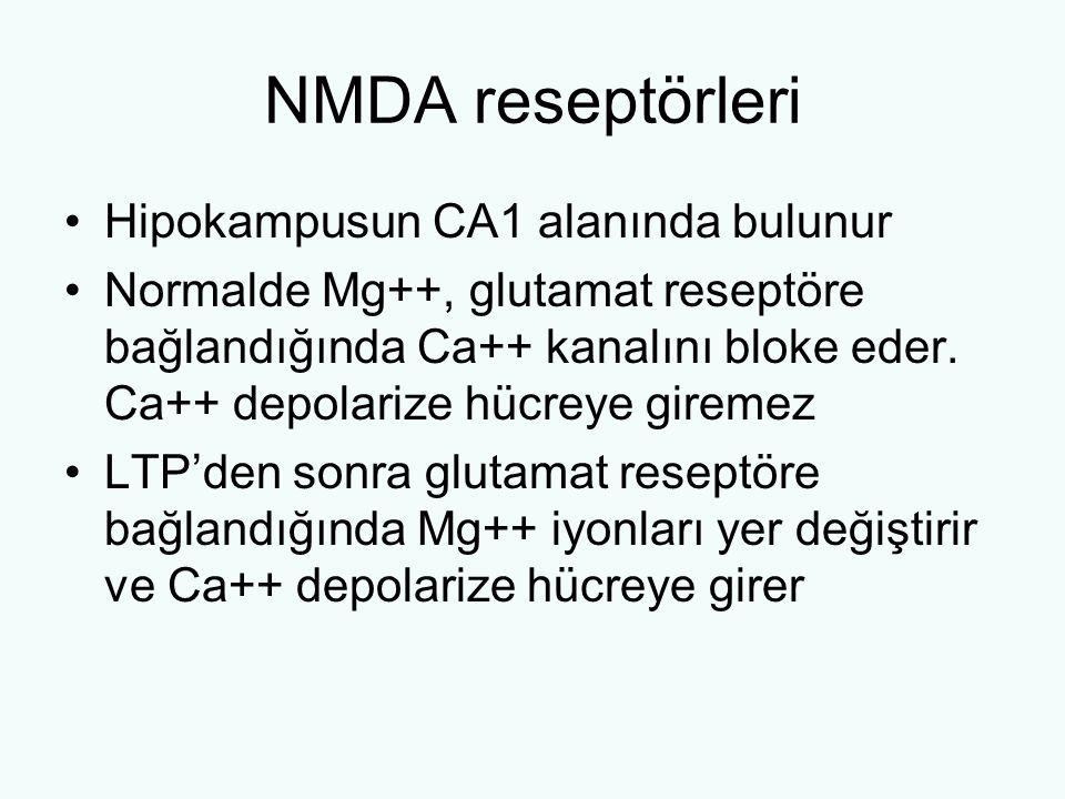 NMDA reseptörleri Hipokampusun CA1 alanında bulunur Normalde Mg++, glutamat reseptöre bağlandığında Ca++ kanalını bloke eder. Ca++ depolarize hücreye