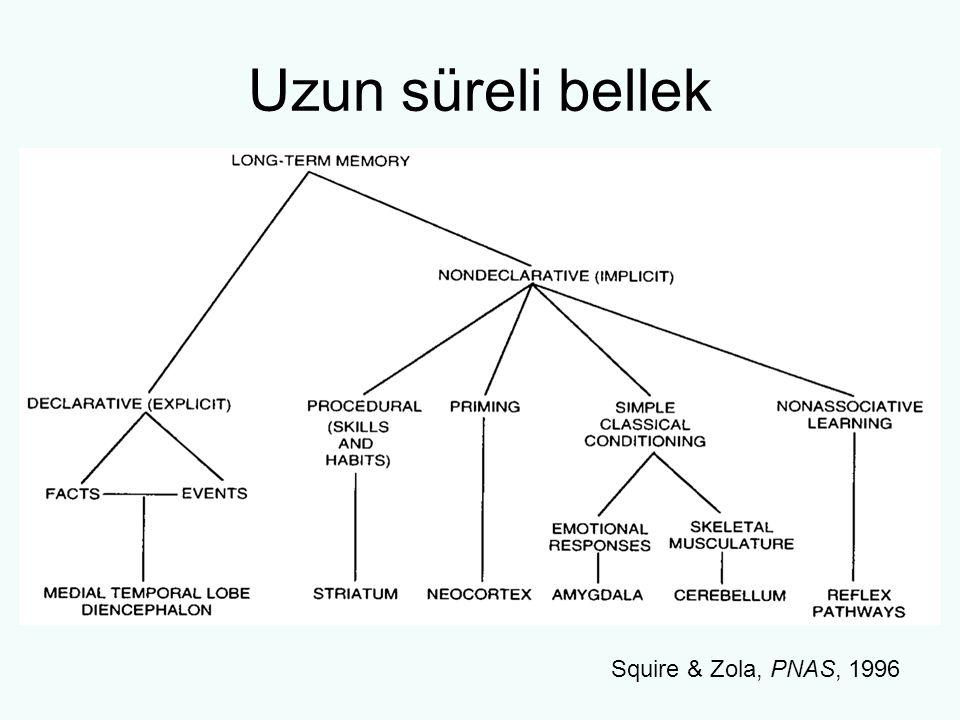 Uzun süreli bellek Squire & Zola, PNAS, 1996