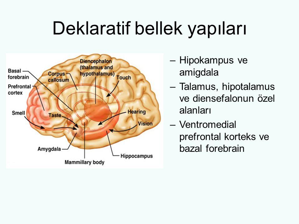 Deklaratif bellek yapıları –Hipokampus ve amigdala –Talamus, hipotalamus ve diensefalonun özel alanları –Ventromedial prefrontal korteks ve bazal fore