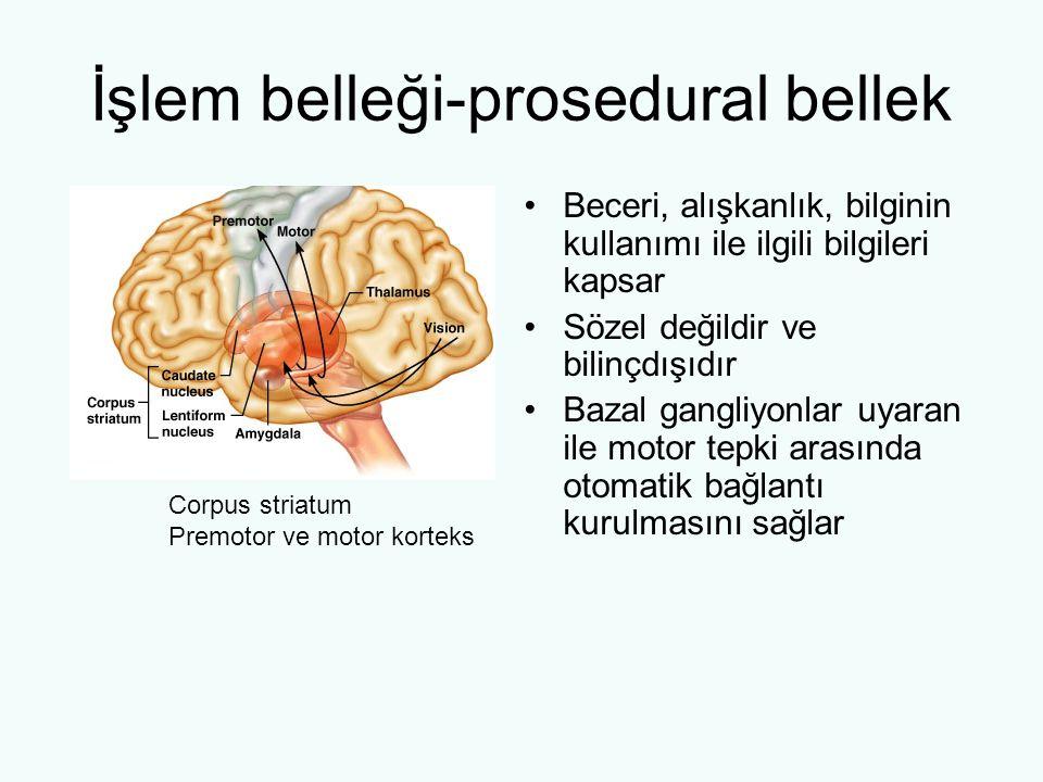 İşlem belleği-prosedural bellek Beceri, alışkanlık, bilginin kullanımı ile ilgili bilgileri kapsar Sözel değildir ve bilinçdışıdır Bazal gangliyonlar uyaran ile motor tepki arasında otomatik bağlantı kurulmasını sağlar Corpus striatum Premotor ve motor korteks