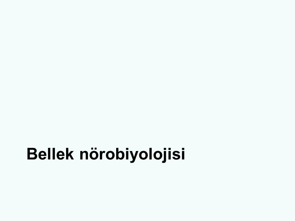 Bellek nörobiyolojisi