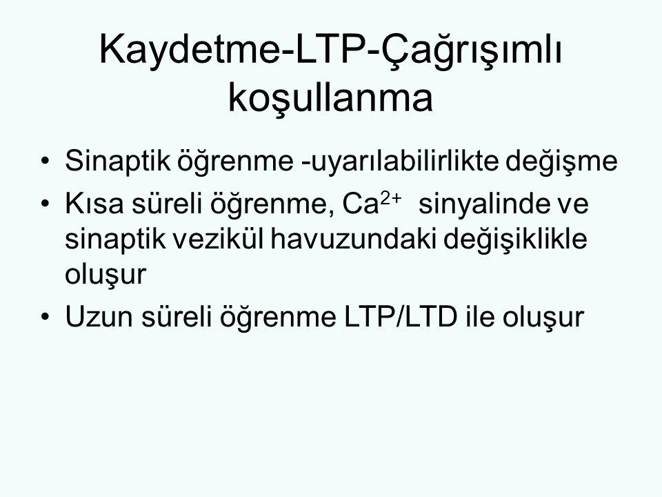 Kaydetme-LTP-Çağrışımlı koşullanma Sinaptik öğrenme -uyarılabilirlikte değişme Kısa süreli öğrenme, Ca 2+ sinyalinde ve sinaptik vezikül havuzundaki değişiklikle oluşur Uzun süreli öğrenme LTP/LTD ile oluşur