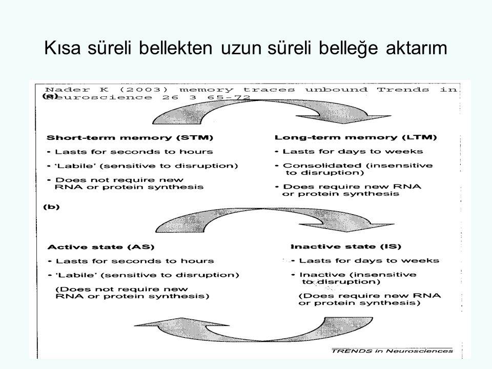 Açık bellek Epizodik bellek –İleriye dönük –Geriye dönük Semantik bellek-düzenlenmiş bilgi –Kavramlar –Önermeler –Sınıflandırmalar –Şemalar –İmajlar
