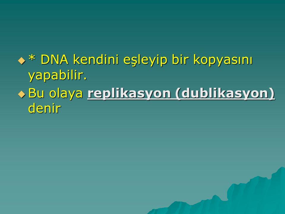  * DNA kendini eşleyip bir kopyasını yapabilir.  Bu olaya replikasyon (dublikasyon) denir