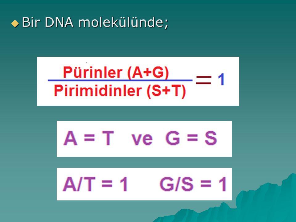  Bir DNA molekülünde;