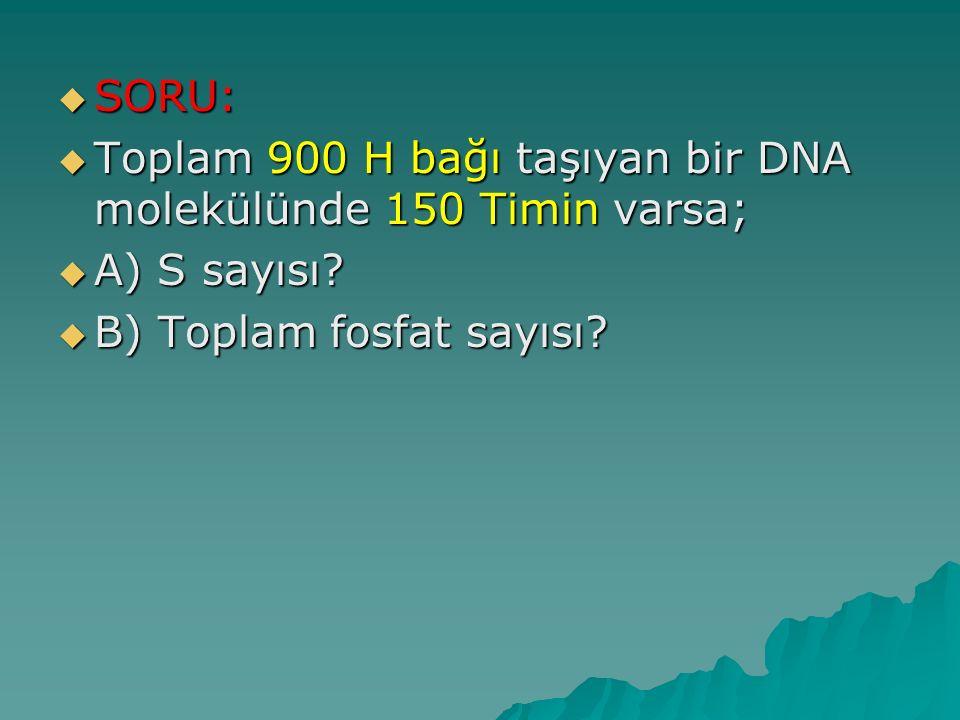  SORU:  Toplam 900 H bağı taşıyan bir DNA molekülünde 150 Timin varsa;  A) S sayısı?  B) Toplam fosfat sayısı?