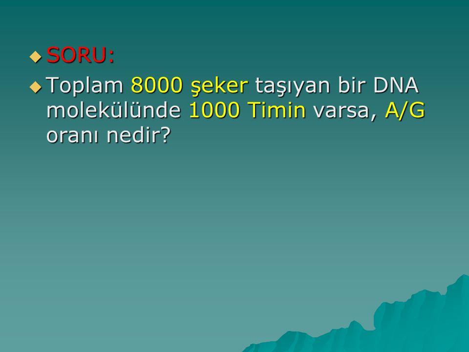  SORU:  Toplam 8000 şeker taşıyan bir DNA molekülünde 1000 Timin varsa, A/G oranı nedir?