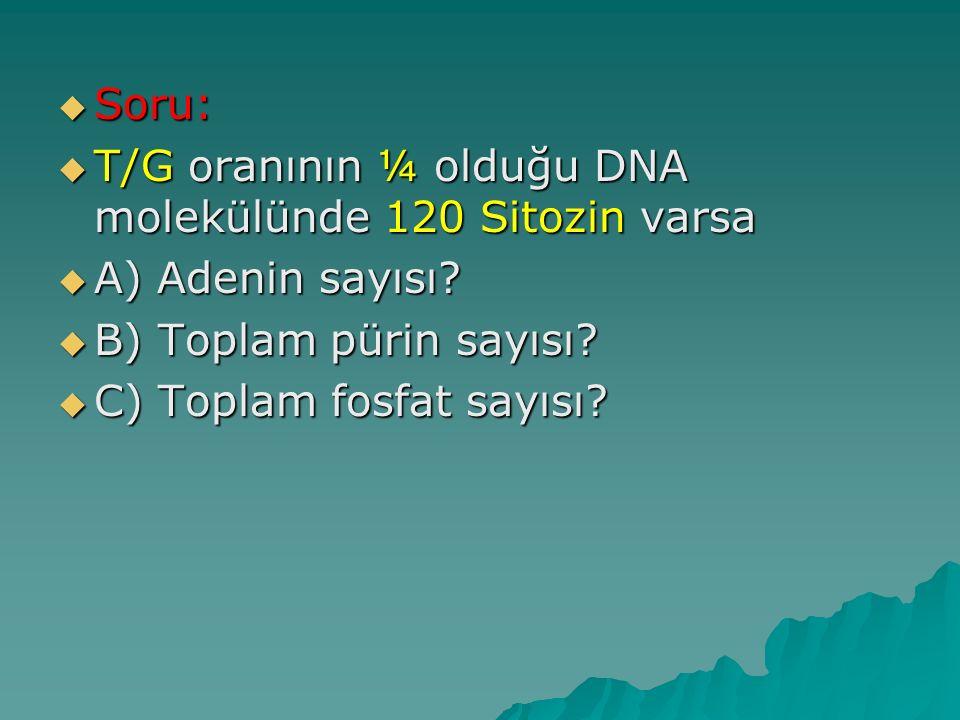  Soru:  T/G oranının ¼ olduğu DNA molekülünde 120 Sitozin varsa  A) Adenin sayısı?  B) Toplam pürin sayısı?  C) Toplam fosfat sayısı?