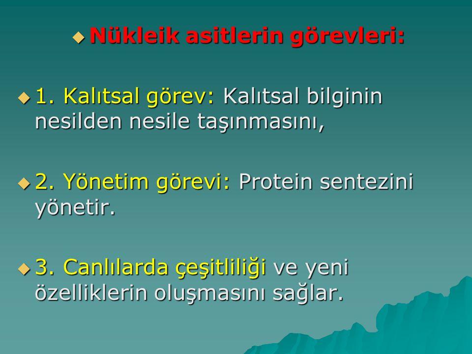  Nükleik asitlerin görevleri:  1. Kalıtsal görev: Kalıtsal bilginin nesilden nesile taşınmasını,  2. Yönetim görevi: Protein sentezini yönetir.  3
