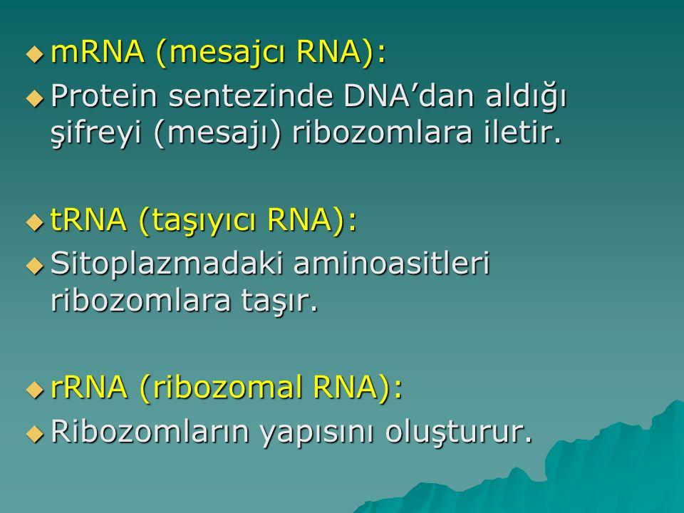  mRNA (mesajcı RNA):  Protein sentezinde DNA'dan aldığı şifreyi (mesajı) ribozomlara iletir.  tRNA (taşıyıcı RNA):  Sitoplazmadaki aminoasitleri r