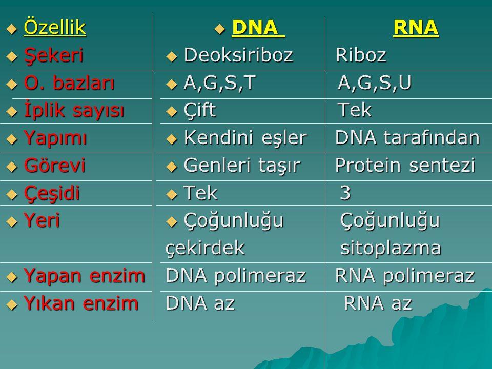  Özellik  Şekeri  O. bazları  İplik sayısı  Yapımı  Görevi  Çeşidi  Yeri  Yapan enzim  Yıkan enzim  DNA RNA  Deoksiriboz Riboz  A,G,S,T A