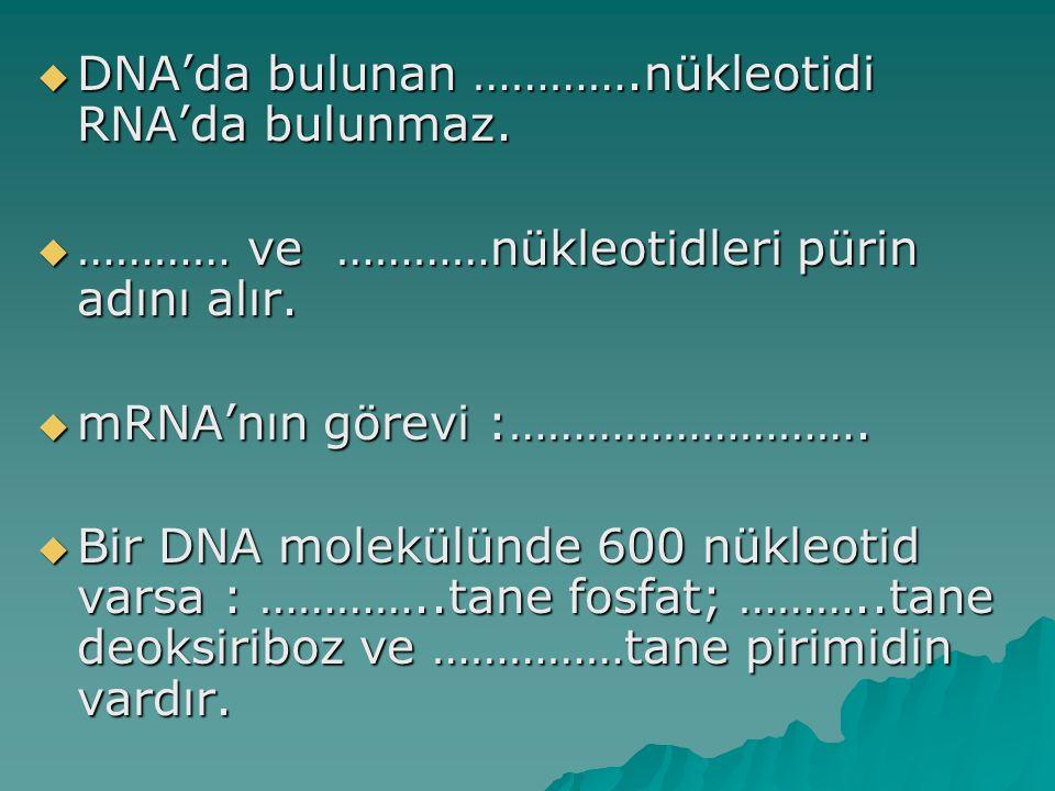  DNA'da bulunan ………….nükleotidi RNA'da bulunmaz.  ………… ve …………nükleotidleri pürin adını alır.  mRNA'nın görevi :……………………….  Bir DNA molekülünde 60