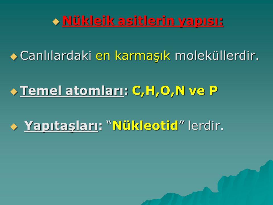 """ Nükleik asitlerin yapısı:  Canlılardaki en karmaşık moleküllerdir.  Temel atomları: C,H,O,N ve P  Yapıtaşları: """"Nükleotid"""" lerdir."""