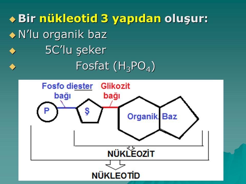  Bir nükleotid 3 yapıdan oluşur:  N'lu organik baz  5C'lu şeker  Fosfat (H 3 PO 4 )