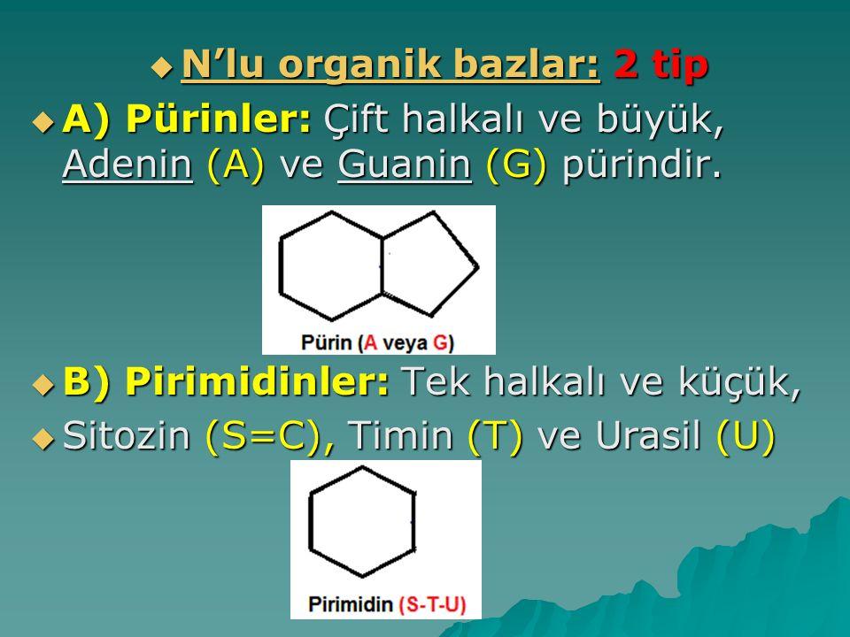  N'lu organik bazlar: 2 tip  A) Pürinler: Çift halkalı ve büyük, Adenin (A) ve Guanin (G) pürindir.  B) Pirimidinler: Tek halkalı ve küçük,  Sitoz
