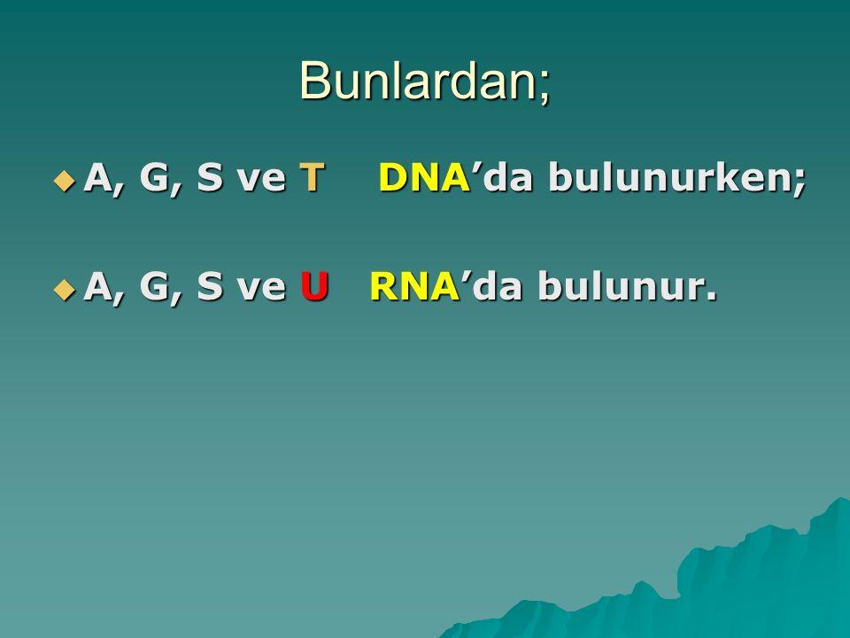  5 C 'lu şekerler:  DNA'daki şeker: Deoksiriboz  RNA'daki şeker: Riboz  Deoksiribozda 1 oksijen eksik.