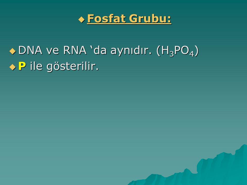  Fosfat Grubu:  DNA ve RNA 'da aynıdır. (H 3 PO 4 )  P ile gösterilir.