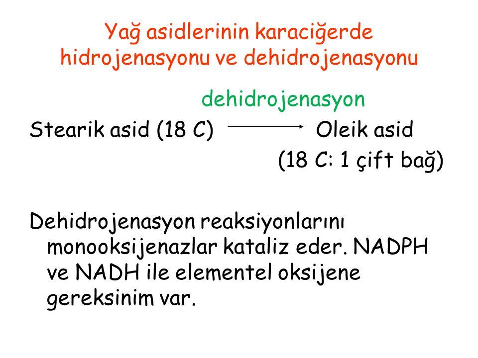 Yağ asidlerinin karaciğerde hidrojenasyonu ve dehidrojenasyonu dehidrojenasyon Stearik asid (18 C) Oleik asid (18 C: 1 çift bağ) Dehidrojenasyon reaks