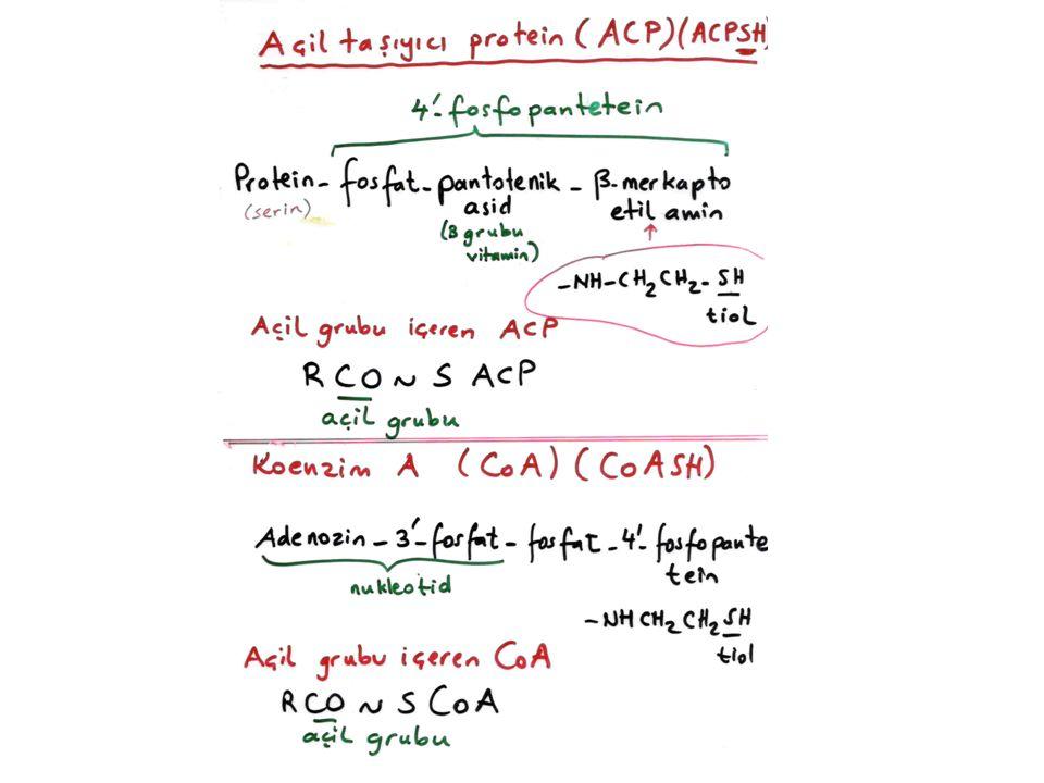 Yağ asidlerinin karaciğerde hidrojenasyonu ve dehidrojenasyonu dehidrojenasyon Stearik asid (18 C) Oleik asid (18 C: 1 çift bağ) Dehidrojenasyon reaksiyonlarını monooksijenazlar kataliz eder.