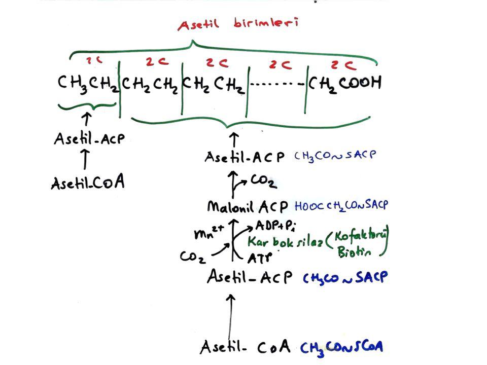 Linoleik asid (18 C: 2 çift bağ) (gerçek esansiyel yağ asidi)  - Linolenik asid (18 C: 3 çift bağ) Araşidonik asid (20 C: 4 çift bağ) Prostanoik asid Prostaglandinler
