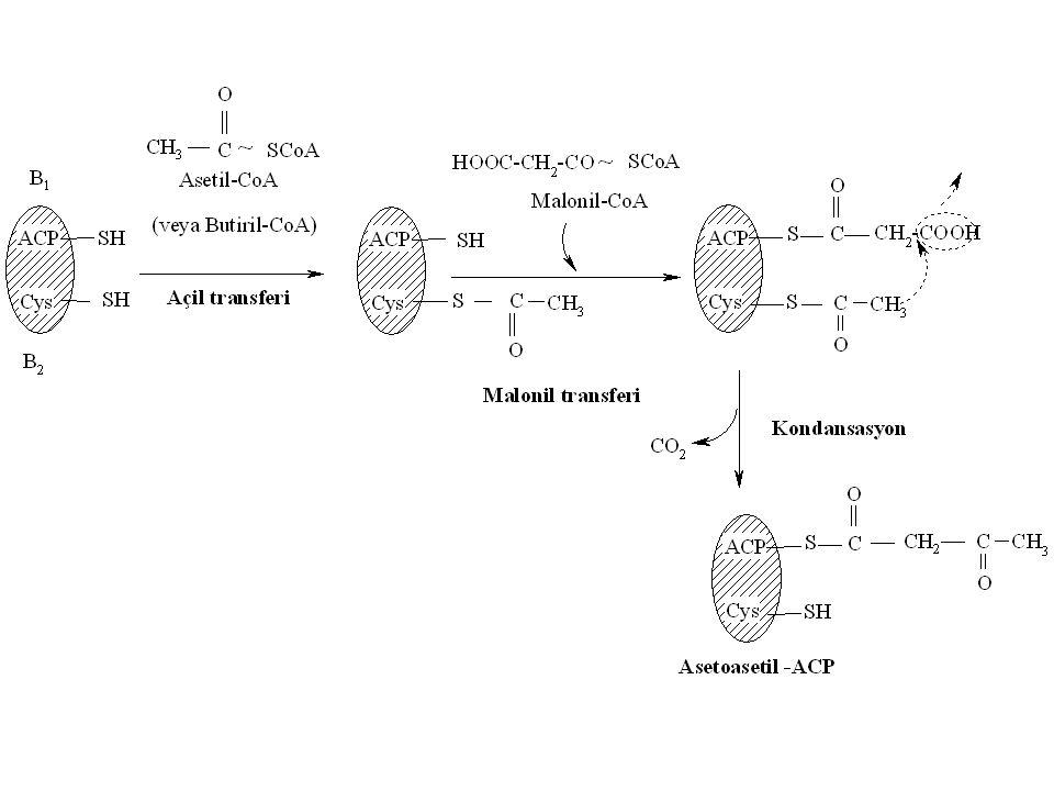 Fosfatid Biosentezi Lesitin