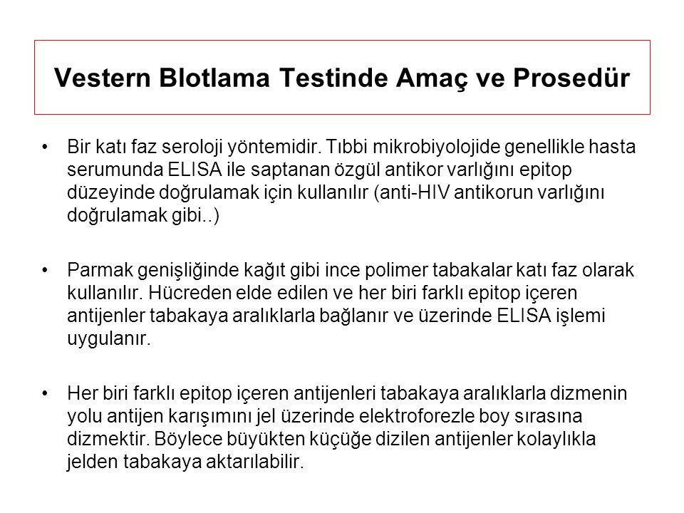 Vestern Blotlama Testinde Amaç ve Prosedür Bir katı faz seroloji yöntemidir.