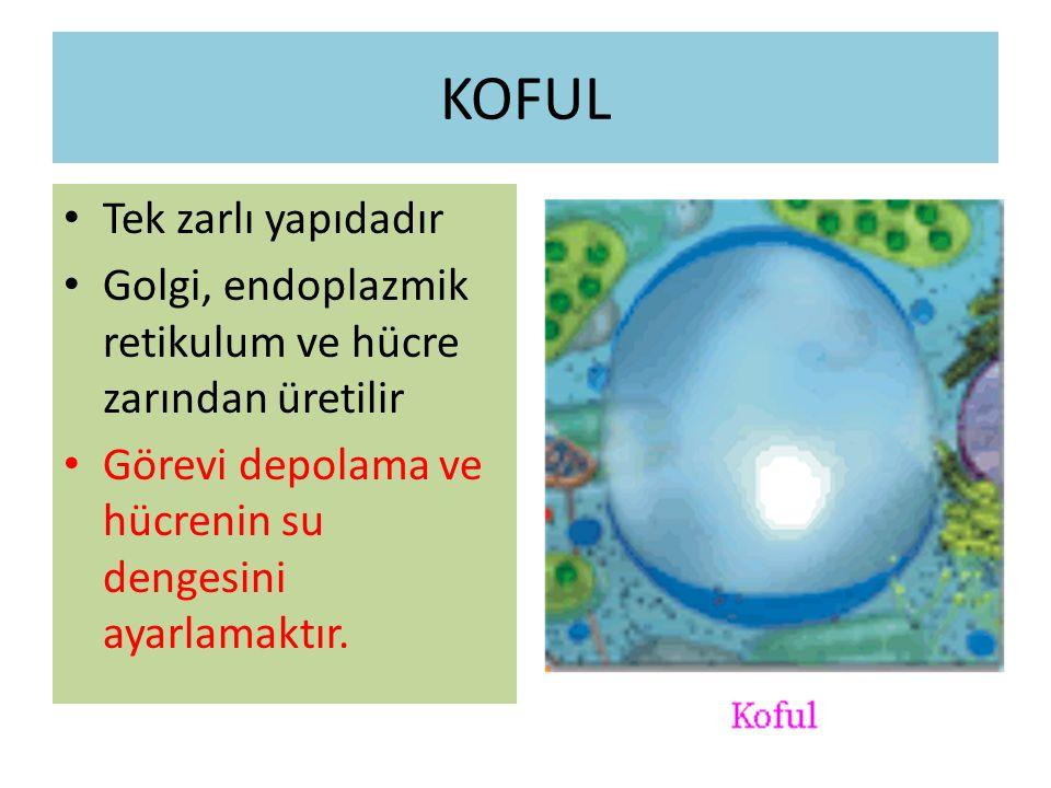 KOFUL Tek zarlı yapıdadır Golgi, endoplazmik retikulum ve hücre zarından üretilir Görevi depolama ve hücrenin su dengesini ayarlamaktır.