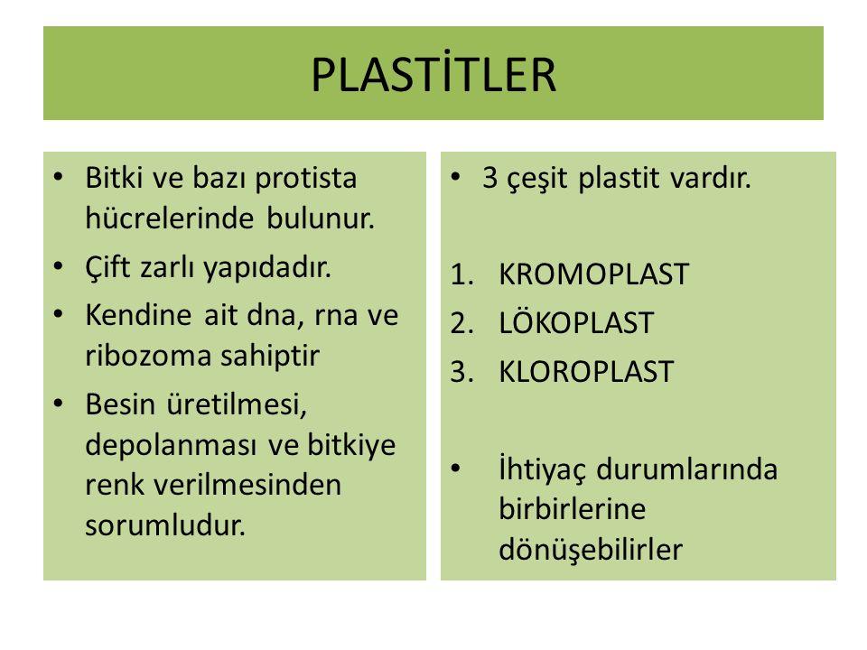 PLASTİTLER Bitki ve bazı protista hücrelerinde bulunur.
