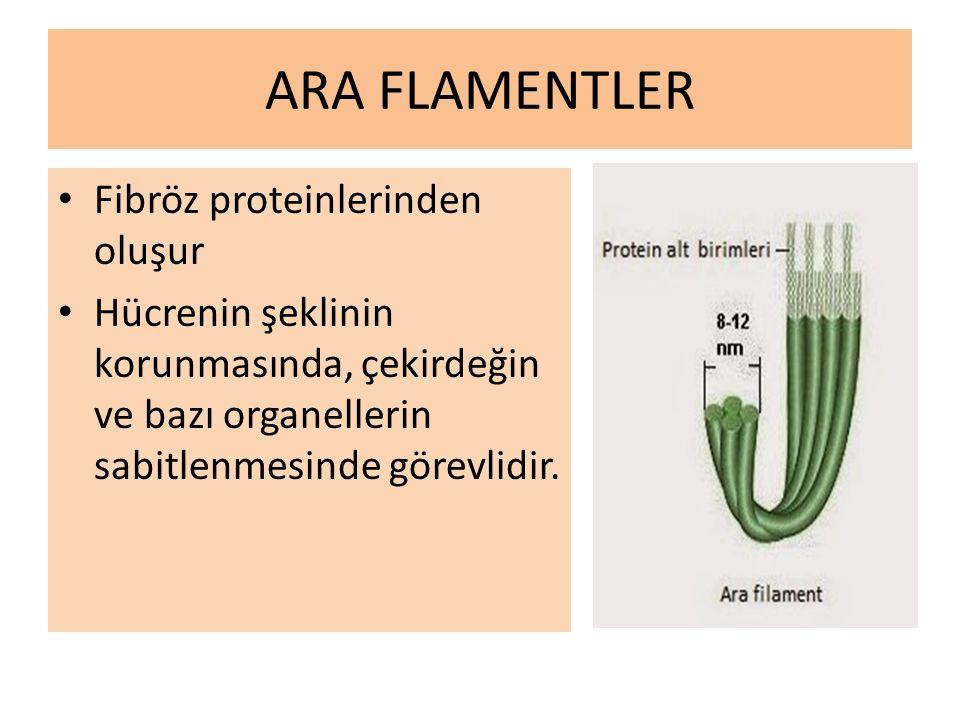ARA FLAMENTLER Fibröz proteinlerinden oluşur Hücrenin şeklinin korunmasında, çekirdeğin ve bazı organellerin sabitlenmesinde görevlidir.
