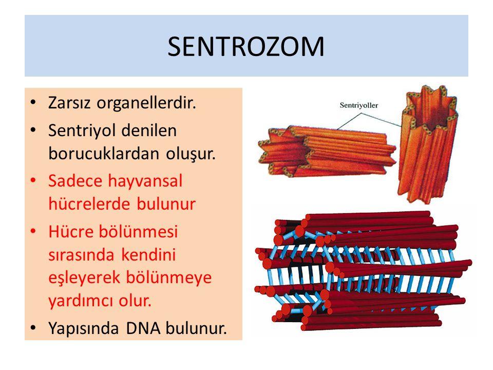 SENTROZOM Zarsız organellerdir.Sentriyol denilen borucuklardan oluşur.