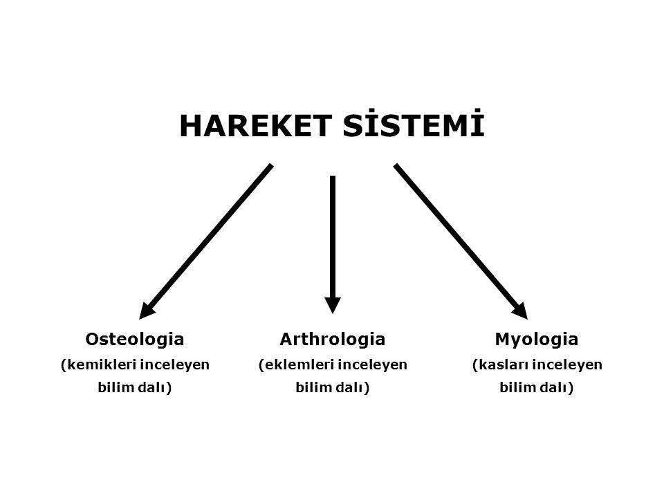 HAREKET SİSTEMİ Osteologia (kemikleri inceleyen bilim dalı) Arthrologia (eklemleri inceleyen bilim dalı) Myologia (kasları inceleyen bilim dalı)