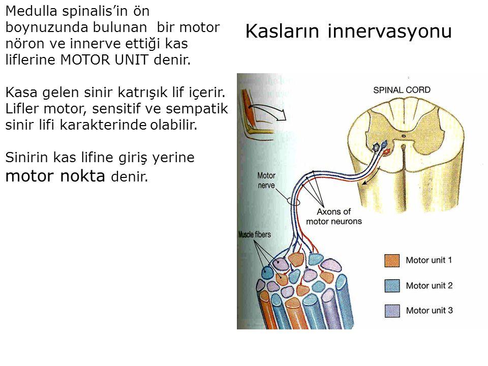 Kasların innervasyonu Medulla spinalis'in ön boynuzunda bulunan bir motor nöron ve innerve ettiği kas liflerine MOTOR UNIT denir. Kasa gelen sinir kat