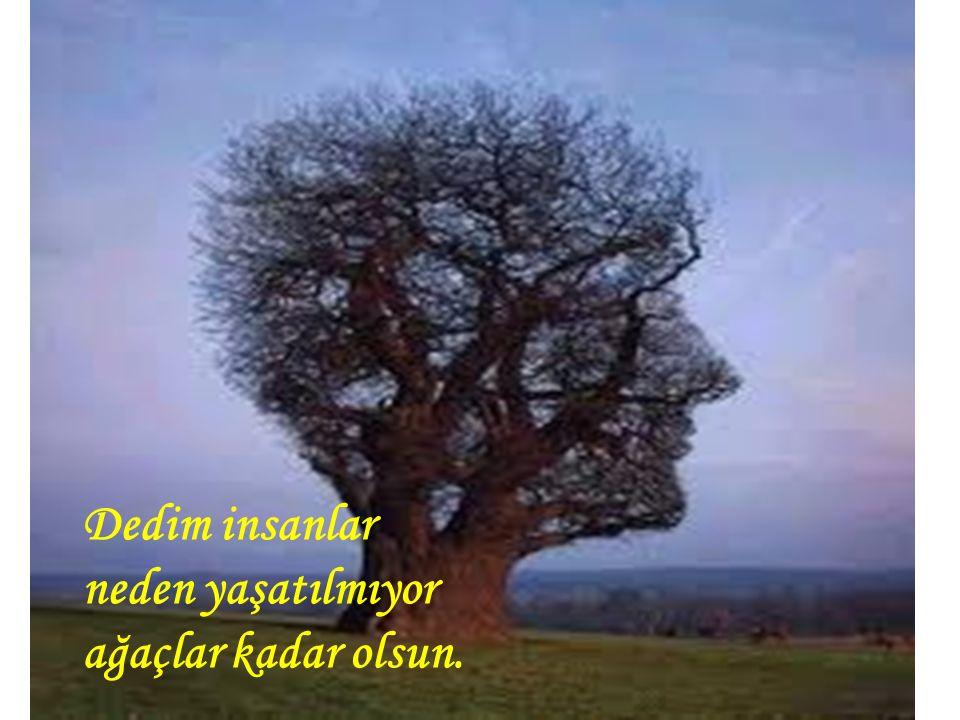Dedim insanlar neden yaşatılmıyor ağaçlar kadar olsun.