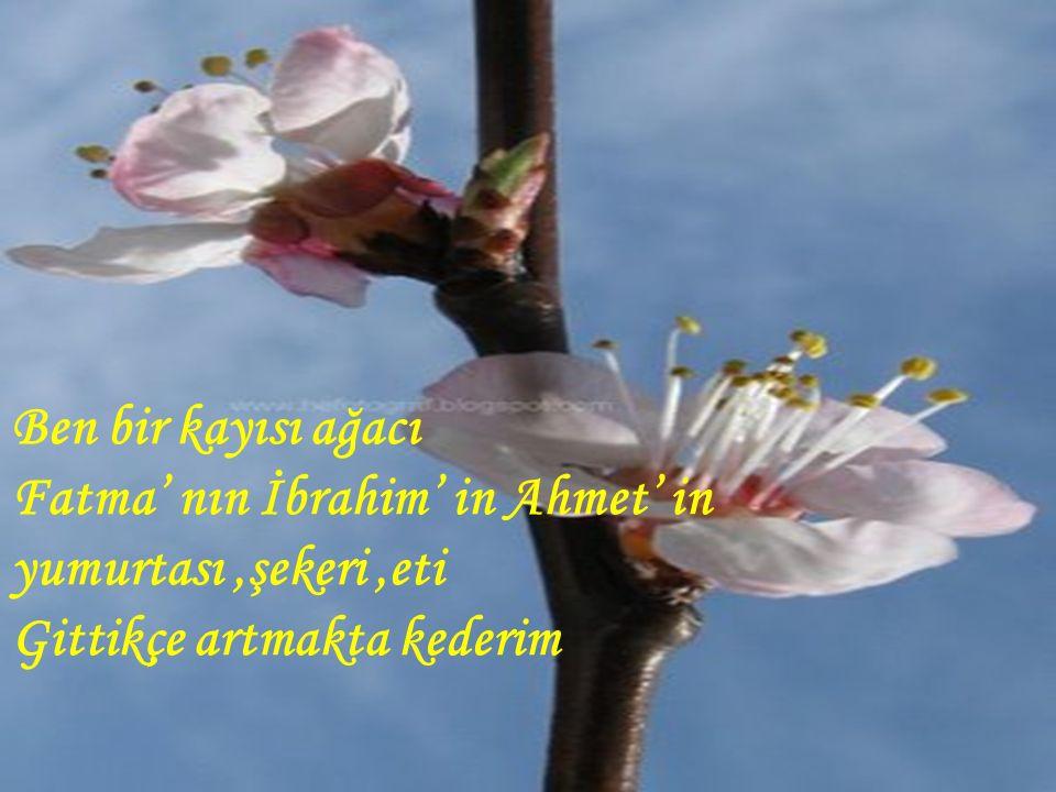 Ben bir kayısı ağacı Fatma' nın İbrahim' in Ahmet' in yumurtası,şekeri,eti Gittikçe artmakta kederim
