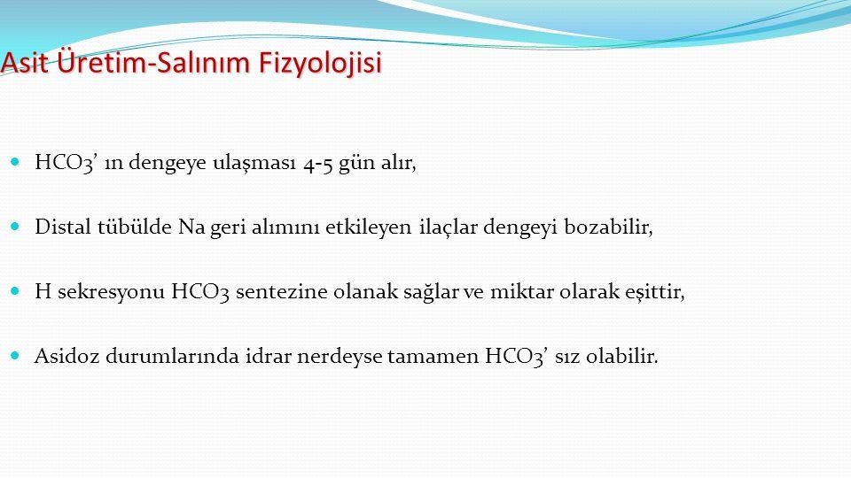 Asit Üretim-Salınım Fizyolojisi HCO3' ın dengeye ulaşması 4-5 gün alır, Distal tübülde Na geri alımını etkileyen ilaçlar dengeyi bozabilir, H sekresyonu HCO3 sentezine olanak sağlar ve miktar olarak eşittir, Asidoz durumlarında idrar nerdeyse tamamen HCO3' sız olabilir.