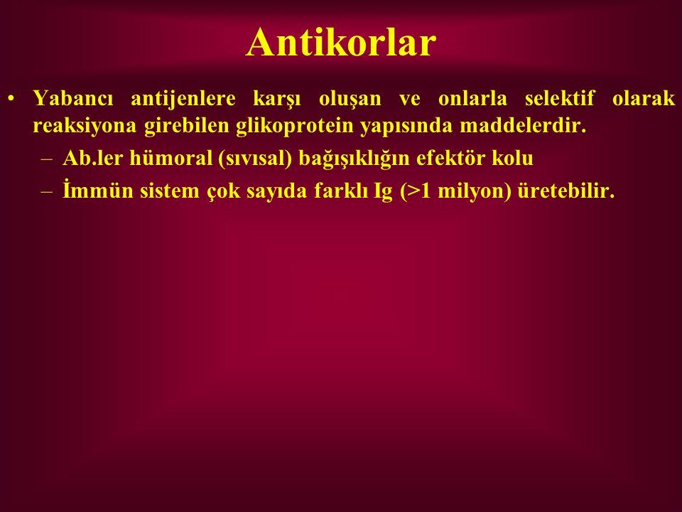 Antikorlar Yabancı antijenlere karşı oluşan ve onlarla selektif olarak reaksiyona girebilen glikoprotein yapısında maddelerdir. –Ab.ler hümoral (sıvıs