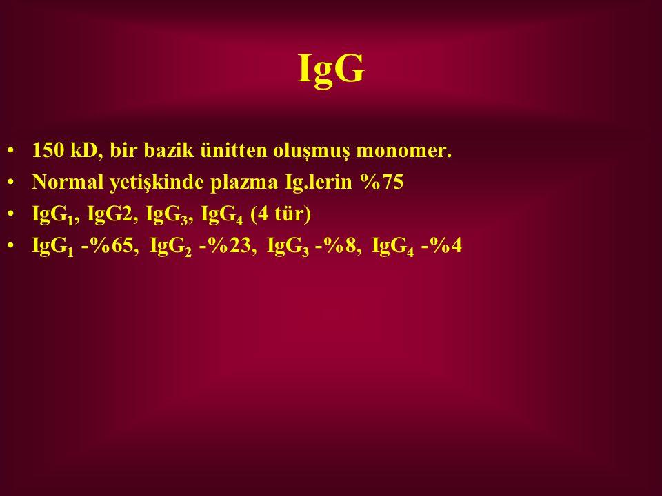 IgG 150 kD, bir bazik ünitten oluşmuş monomer. Normal yetişkinde plazma Ig.lerin %75 IgG 1, IgG2, IgG 3, IgG 4 (4 tür) IgG 1 -%65, IgG 2 -%23, IgG 3 -