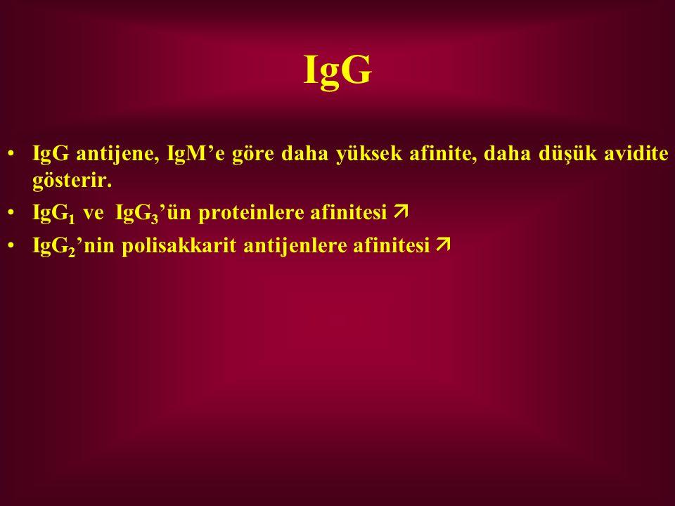 IgG IgG antijene, IgM'e göre daha yüksek afinite, daha düşük avidite gösterir. IgG 1 ve IgG 3 'ün proteinlere afinitesi  IgG 2 'nin polisakkarit anti