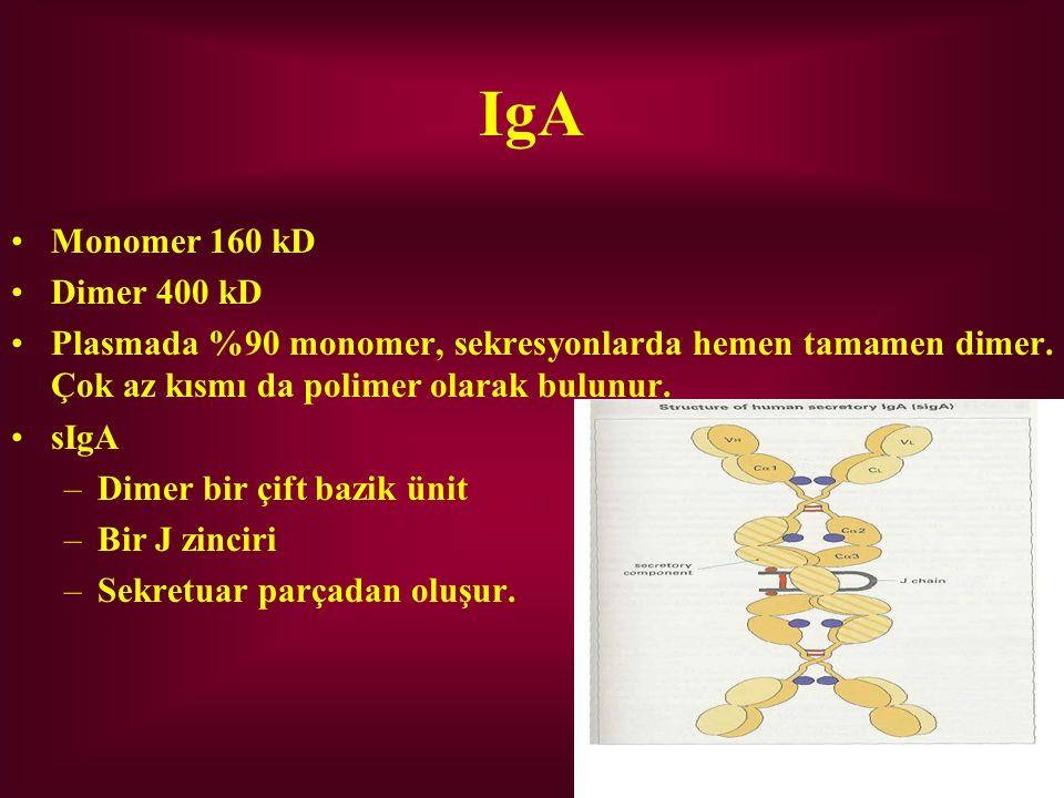 IgA Monomer 160 kD Dimer 400 kD Plasmada %90 monomer, sekresyonlarda hemen tamamen dimer. Çok az kısmı da polimer olarak bulunur. sIgA –Dimer bir çift