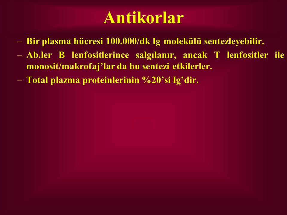 Antikorlar –Bir plasma hücresi 100.000/dk Ig molekülü sentezleyebilir. –Ab.ler B lenfositlerince salgılanır, ancak T lenfositler ile monosit/makrofaj'