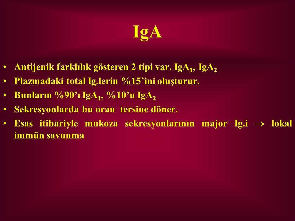 IgA Antijenik farklılık gösteren 2 tipi var. IgA 1, IgA 2 Plazmadaki total Ig.lerin %15'ini oluşturur. Bunların %90'ı IgA 1, %10'u IgA 2 Sekresyonlard