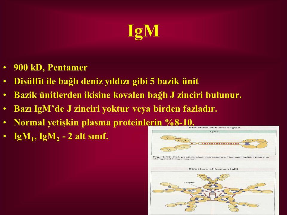IgM 900 kD, Pentamer Disülfit ile bağlı deniz yıldızı gibi 5 bazik ünit Bazik ünitlerden ikisine kovalen bağlı J zinciri bulunur. Bazı IgM'de J zincir