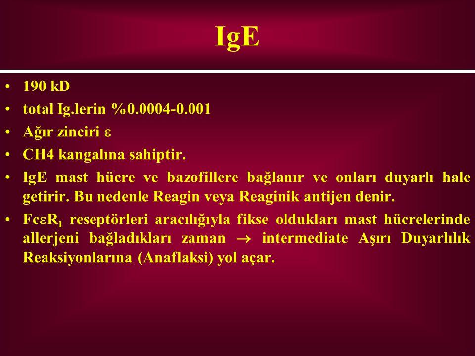 IgE 190 kD total Ig.lerin %0.0004-0.001 Ağır zinciri  CH4 kangalına sahiptir. IgE mast hücre ve bazofillere bağlanır ve onları duyarlı hale getirir.