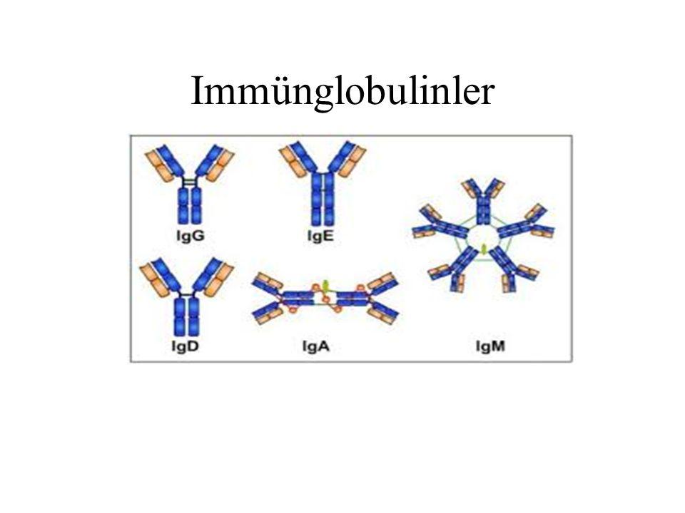Antikorların Fonksiyonları MO.ların mukozaya aderans ve kolonizasyonlarını inhibe etmek MO.ların mukozaya aderans ve kolonizasyonlarını inhibe etmek Zararlı bazı makromoleküllerin GİS mukozadan absorbsiyonunu engellemek Zararlı bazı makromoleküllerin GİS mukozadan absorbsiyonunu engellemek